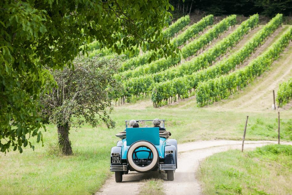 emilion vines bordeaux wine