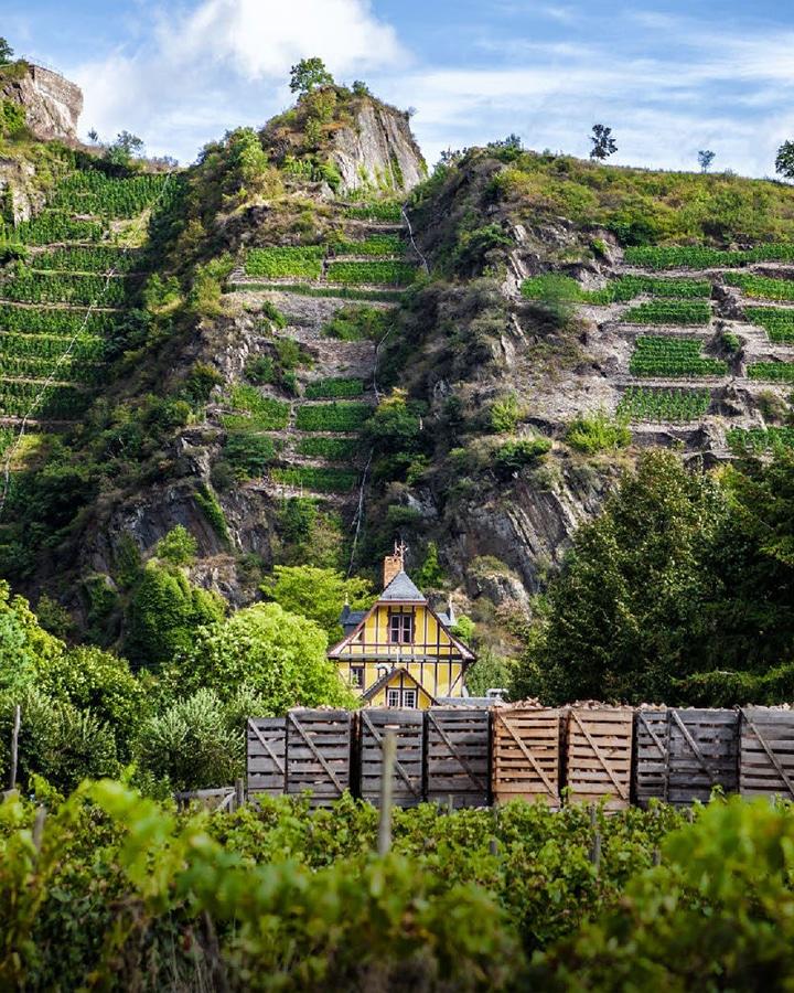 Wines of Germany